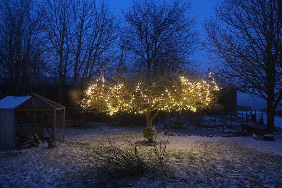 Sprookjesboom_Hoeve_Engelenburgh